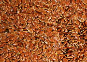 Fibre flax seeds, var. Marylin